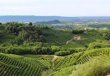 Allevamento bouledogue francese Veneto
