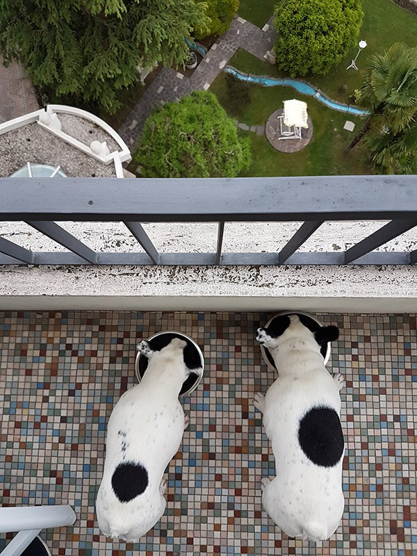 Abano Terme vista panoramica con cani
