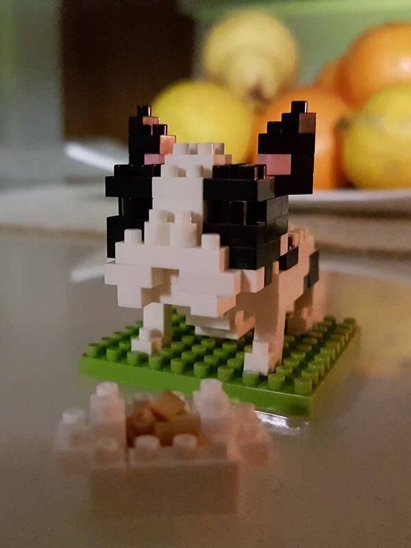 Bulldog Francese Nanoblock - Dettaglio