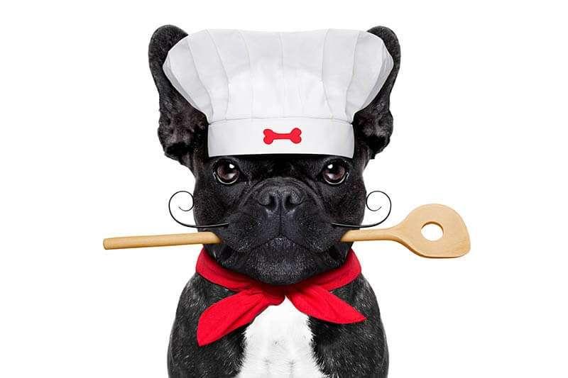 Dieta casalinga per bulldog francese