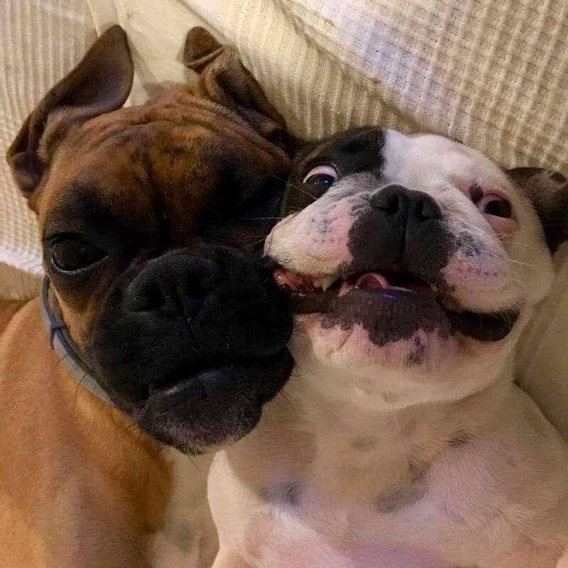 Io e Coco' vi salutano con questo bellissimo selfie che dice tutto sulla loro bellissima amicizia...