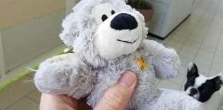 Recensione orso Kong