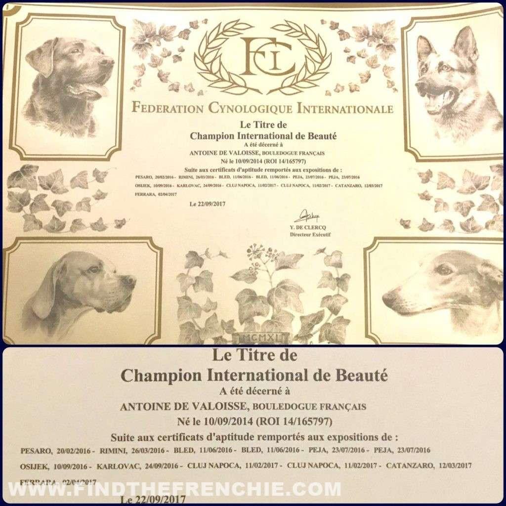 Attestato Campione Internazionale Antoine De Valoisse