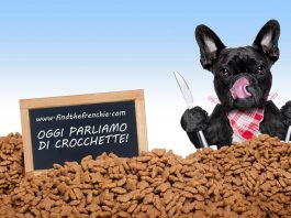 crocchette simpson ideali per bulldog francese