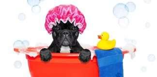 Shampoo per bulldog francese