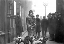 Origine del bouledogue francese. Una donna dell'alta società inglese con la gang dei Bouledogue all'esposizione canina di Marylebone