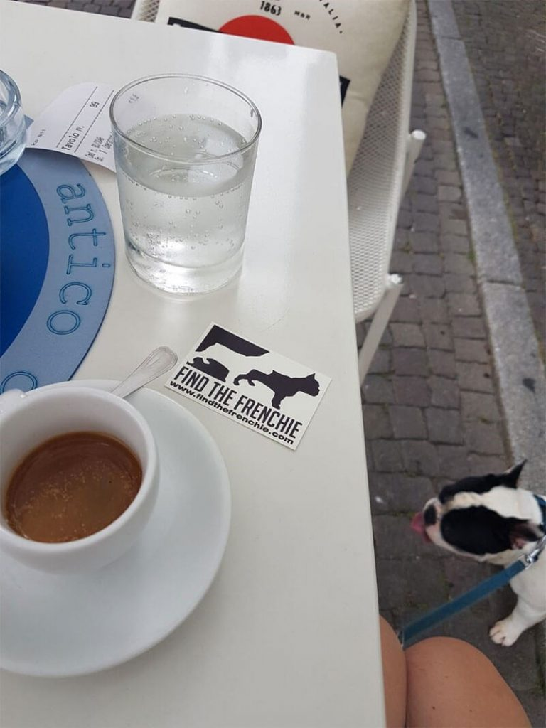 Bouledogue Francese a Treviso