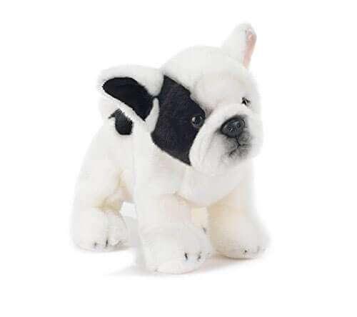 Francky Bulldog Francese