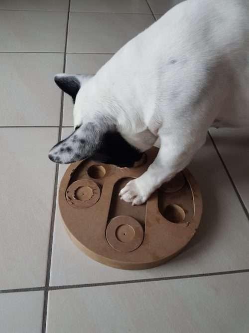 Gioco d'intelligenza per caneKarlie Doggy Brain Train 2in1