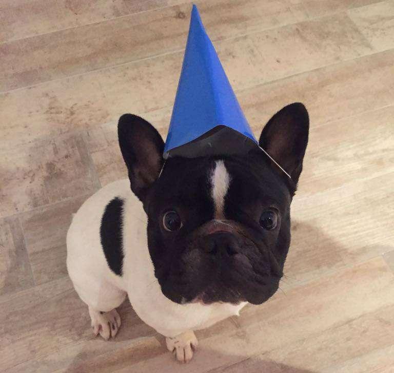 La bellissima testa con occhi tondi di Paco (era il suo compleanno...)