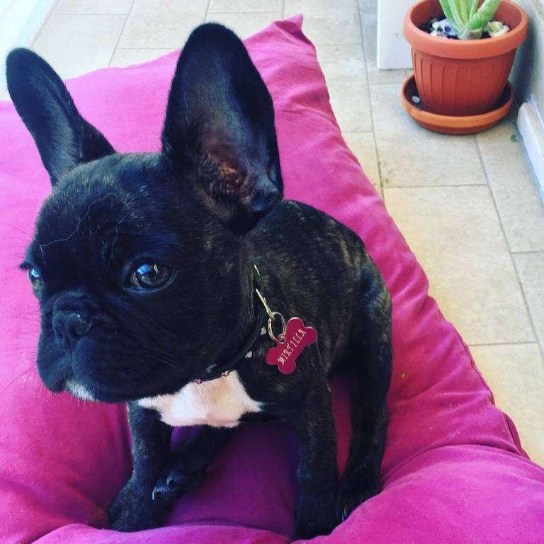 Uno scatto di Mirtilla in rosa :-)