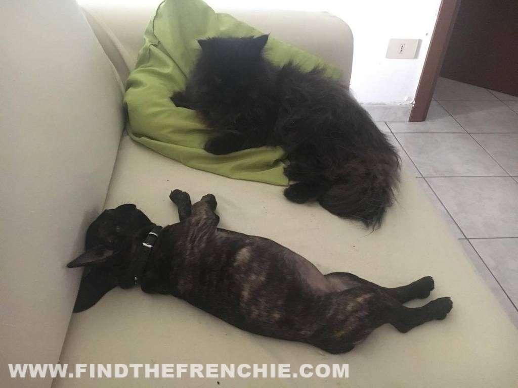 Scar e Mirtilla in relax sul divano di casa