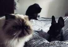 convivenza cane e gatto foto di gruppo