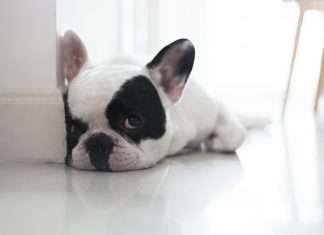 Casa a prova di cucciolo