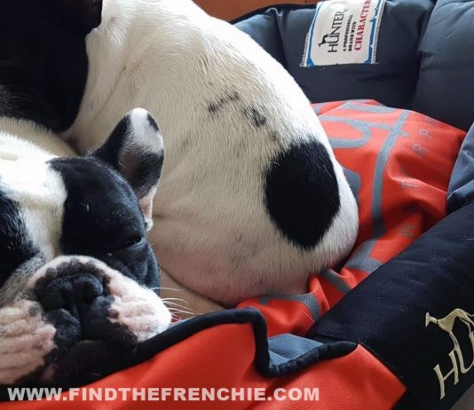 Salute E Benessere Archivi Find The Frenchie