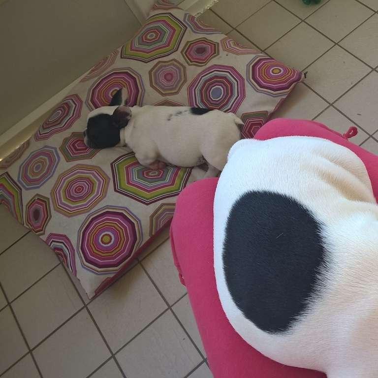 cuccia per cani cuscino