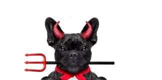 offerte halloween per il tuo bulldog francese