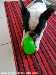 pupazzo giocattolo per cani