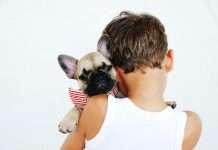 Cucciolo di Bulldog Francese, cosa serve davvero? La nostra guida.