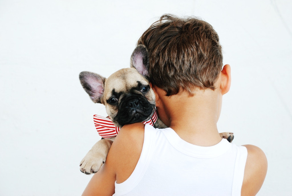 Cucciolo Di Bulldog Francese Cosa Serve Davvero La Nostra Guida
