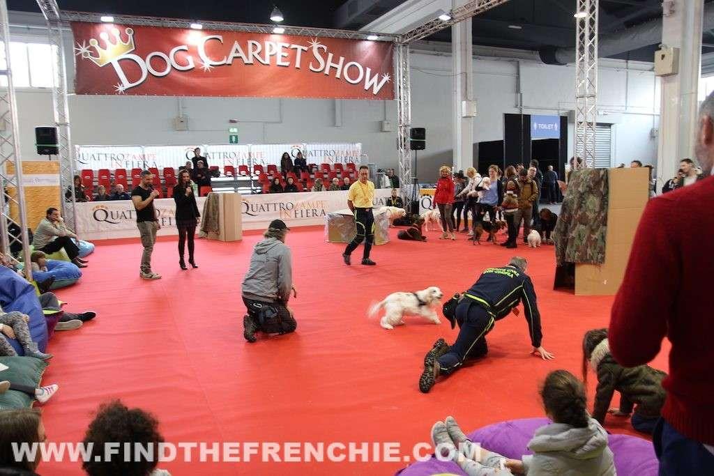 Quattro zampe in fiera Padova Dog Carpet Show