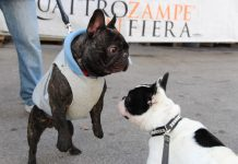 Dante e Rocco si incontrano a Quattro zampe in fiera Padova 2017