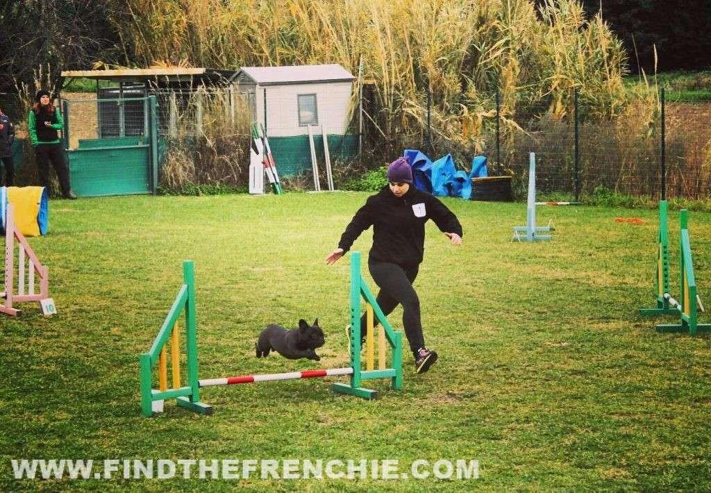 Agility Dog con Bulldog Francese