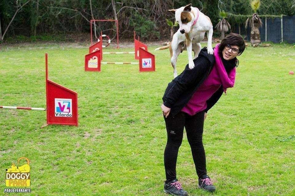 gility Dog con Almastaff_Killa_Salto