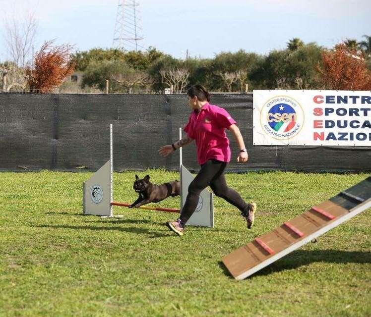 Agility Dog con Bulldog Francese_percorso