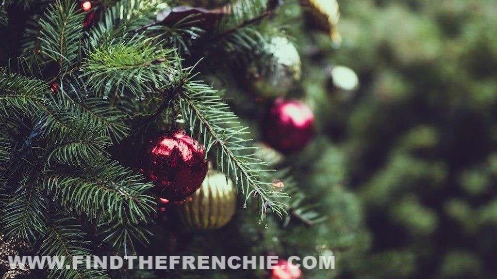 Piante tossiche di Natale per il Bulldog Francese - Abete