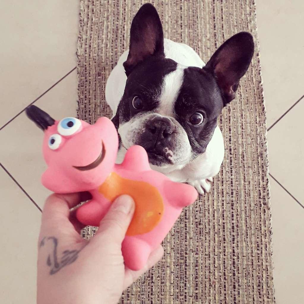 Bulldog Francese e Carlino. La storia di Achille ed Ettore