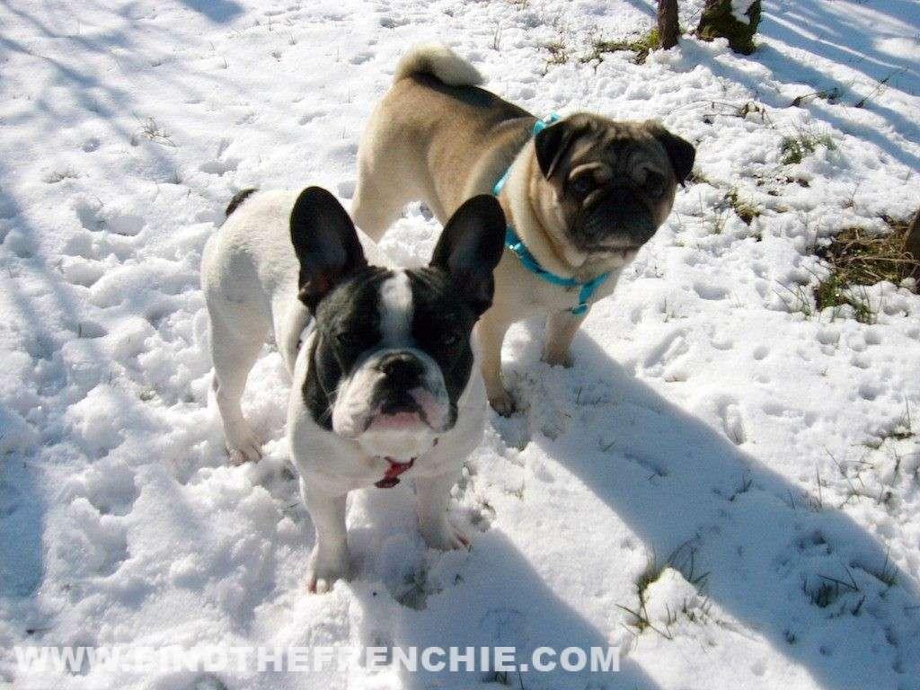 Ettore ed Achille sulla neve