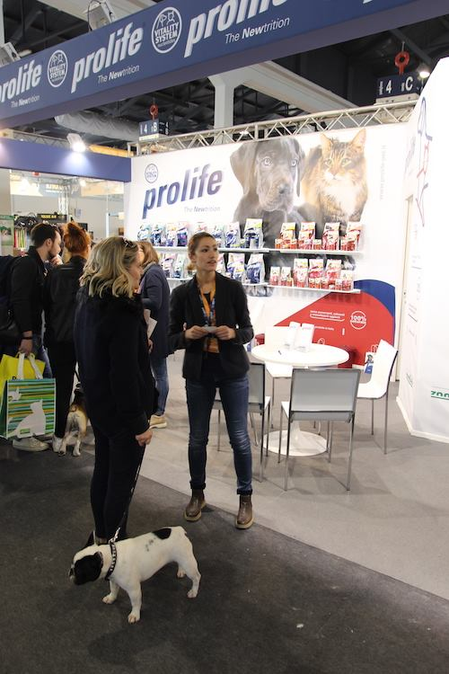 Prolife pet food find the frenchie Mia De Valoisse