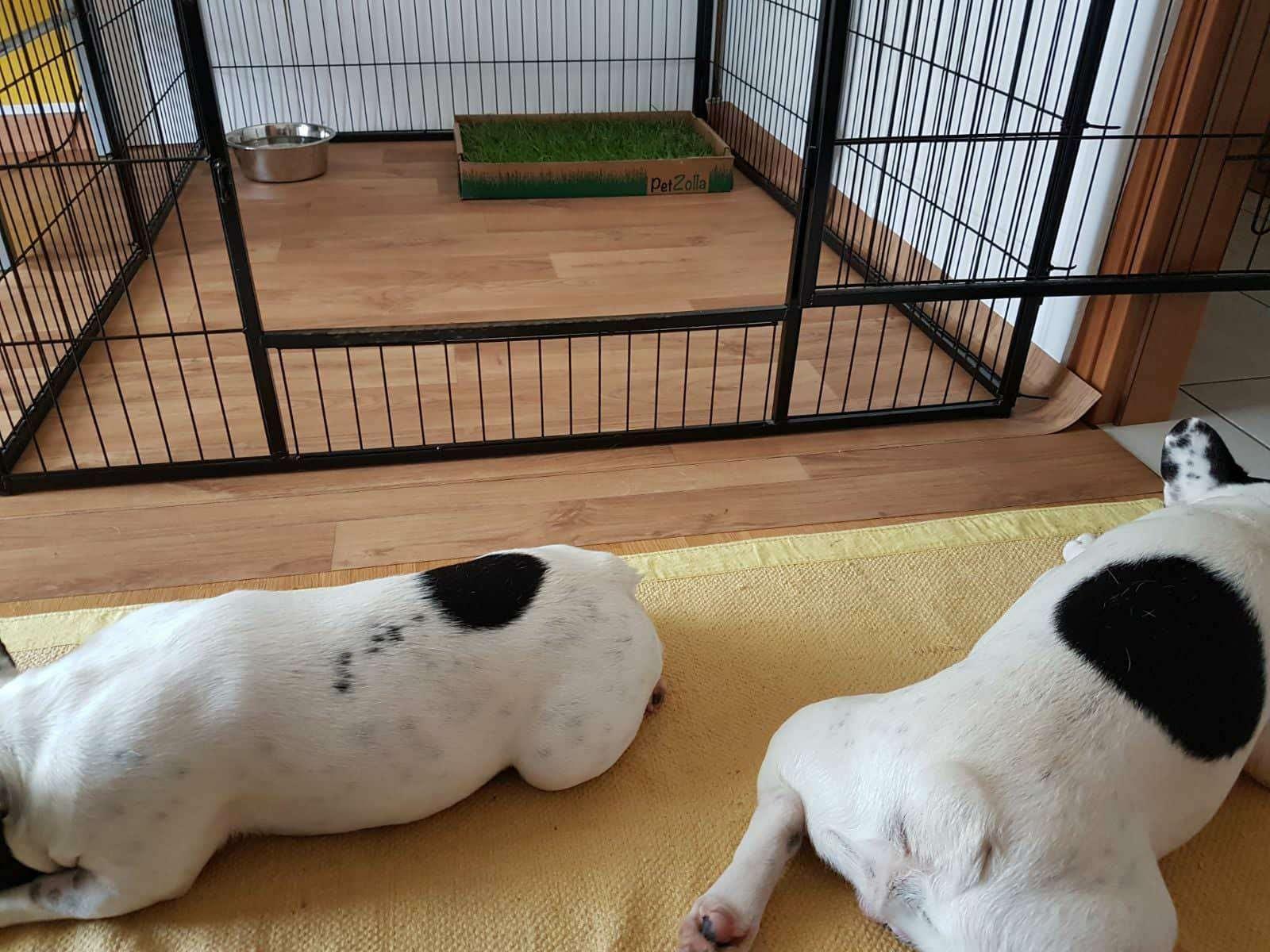 Recinto per cani da interno la nostra guida e tanti consigli for Cani da tenere in casa