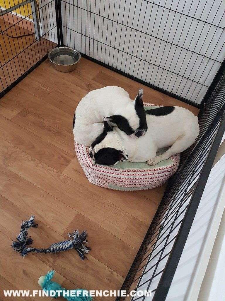 dove far dormire il cucciolo