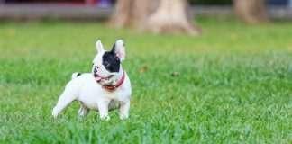 Il cucciolo e i bisognini fuori casa. Come educarlo?