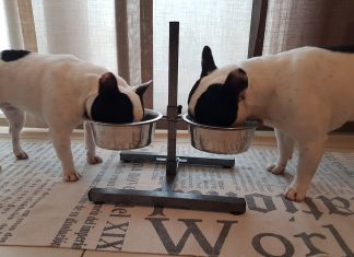 Alimentazione del cucciolo_Bulldog Francee - Find the Frenchie