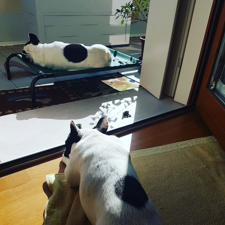 Brandina per cani - Bouledogue prende il sole