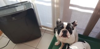 Purificatore Aria Electrolux EAP450 Oxygen Collection_Dante_Mia_FindtheFrenchie