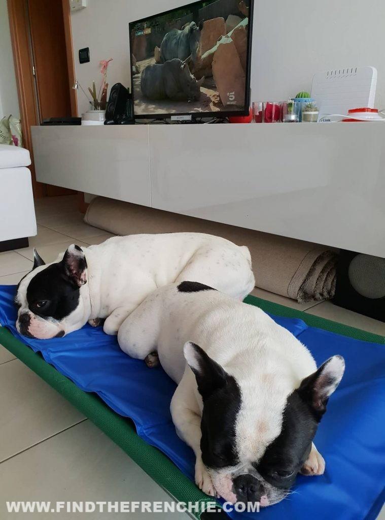 Dante e Mia sul tappetino refrigerante