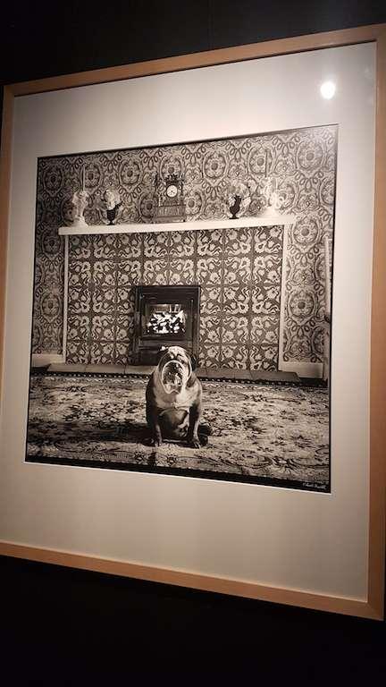 Bulldog Inglese foto di Elliott Erwitt