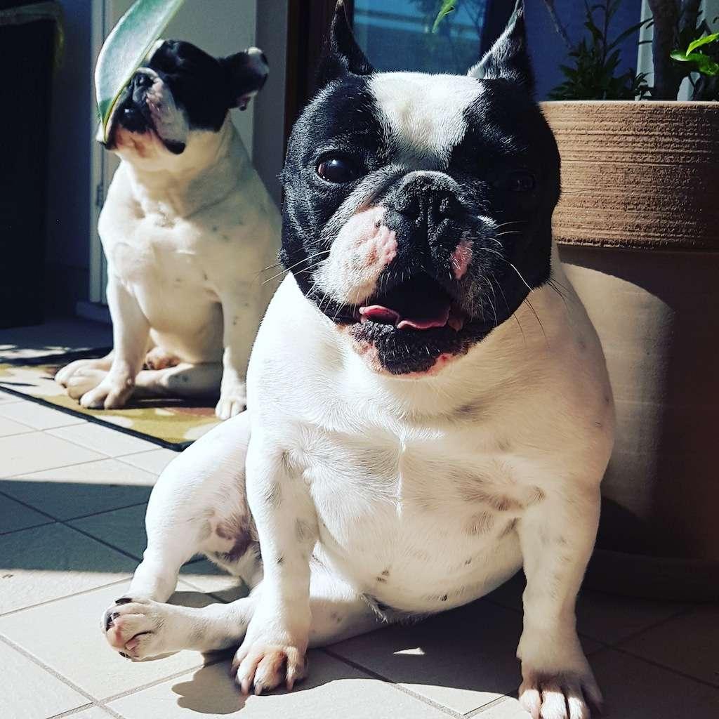 Dante e Mia al sole della primavera
