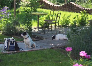 B&B Villa 61- Week end con Bulldog Francese-Find-theFrenchie