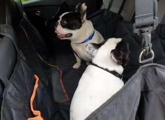 Coprisedile auto per cani. Dante e Mia Bouledogue Francese. La nostra recensione
