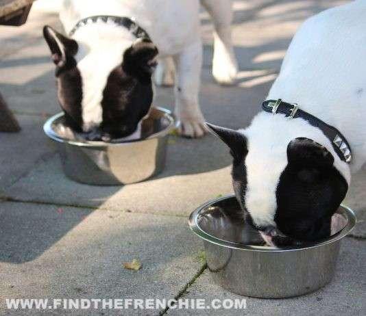 Dante e Mia mangiano la loro razione di cibo