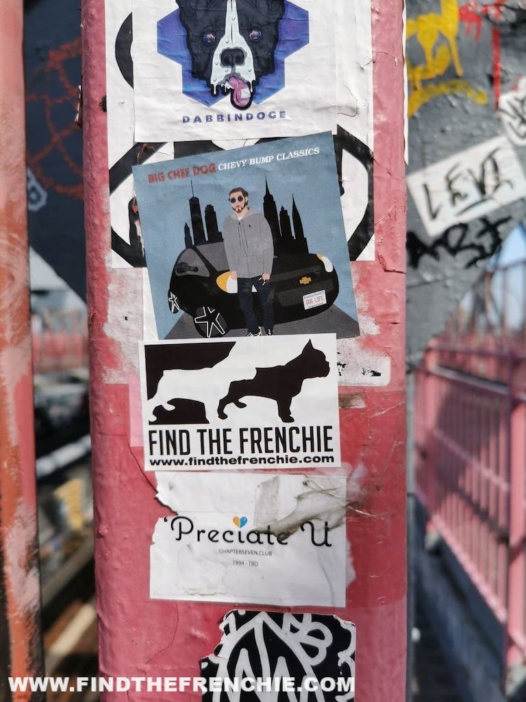 French Bulldog in New York-Find the Frenchie