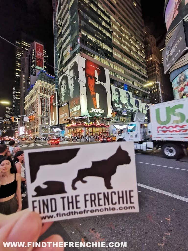French Bulldog in New York- Find the Frenchie Times Square