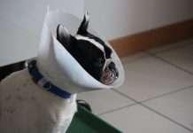 Assicurare il cane polizze a confronto