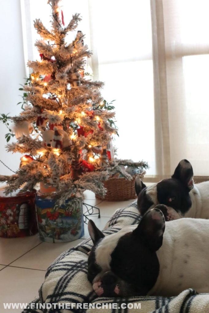 Bouledogue Francese addicted? Super Guida Regali di Natale