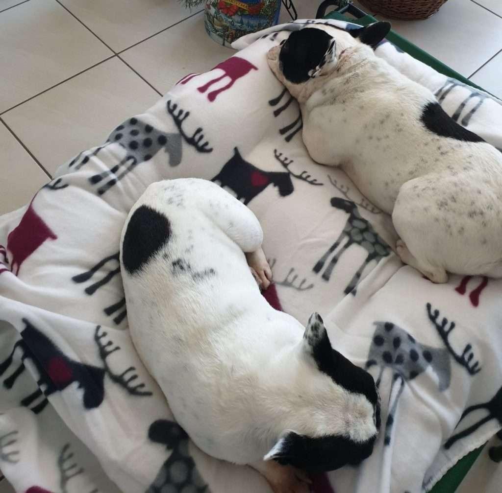 Botti di Capodonno come proteggere il tuo cane